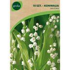 Konwalia majowa 10 szt. cebulki kwiatów GEOLIA