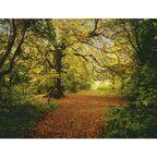 Fotografia ścienna AUTUMN FOREST 270.0 x 388 cm KOMAR