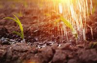 Susza w ogrodzie. Jakie rośliny nie wymagają dużo wody?