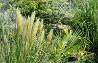 Jak sadzić i pielęgnować trawy ozdobne?