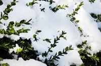 Kalendarz ogrodnika – grudzień