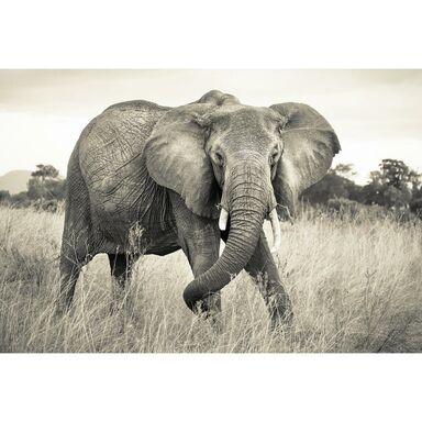 Fotografia ścienna ELEPHANT 248 x 368 cm KOMAR
