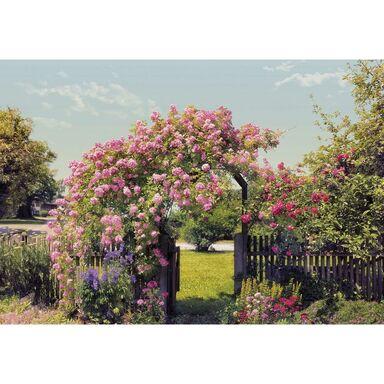 Fototapeta ROSE GARDEN 254 x 368 cm