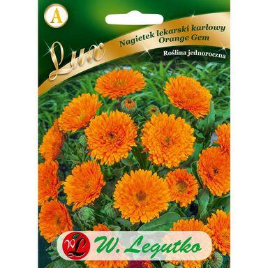 Nasiona kwiatów ORANGE GEM Nagietek lekarski W. LEGUTKO