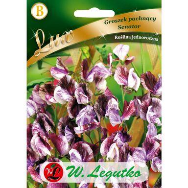 Nasiona kwiatów SENATOR Groszek pachnący W. LEGUTKO