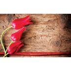 Fototapeta CZERWONE TULIPANY 104 x 70 cm