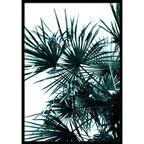Kanwa Palma 70 x 100 cm