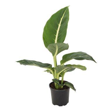 Rośliny zielone MIX 10 - 20 cm