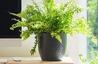 Rośliny oczyszczające powietrze w Twoim domu