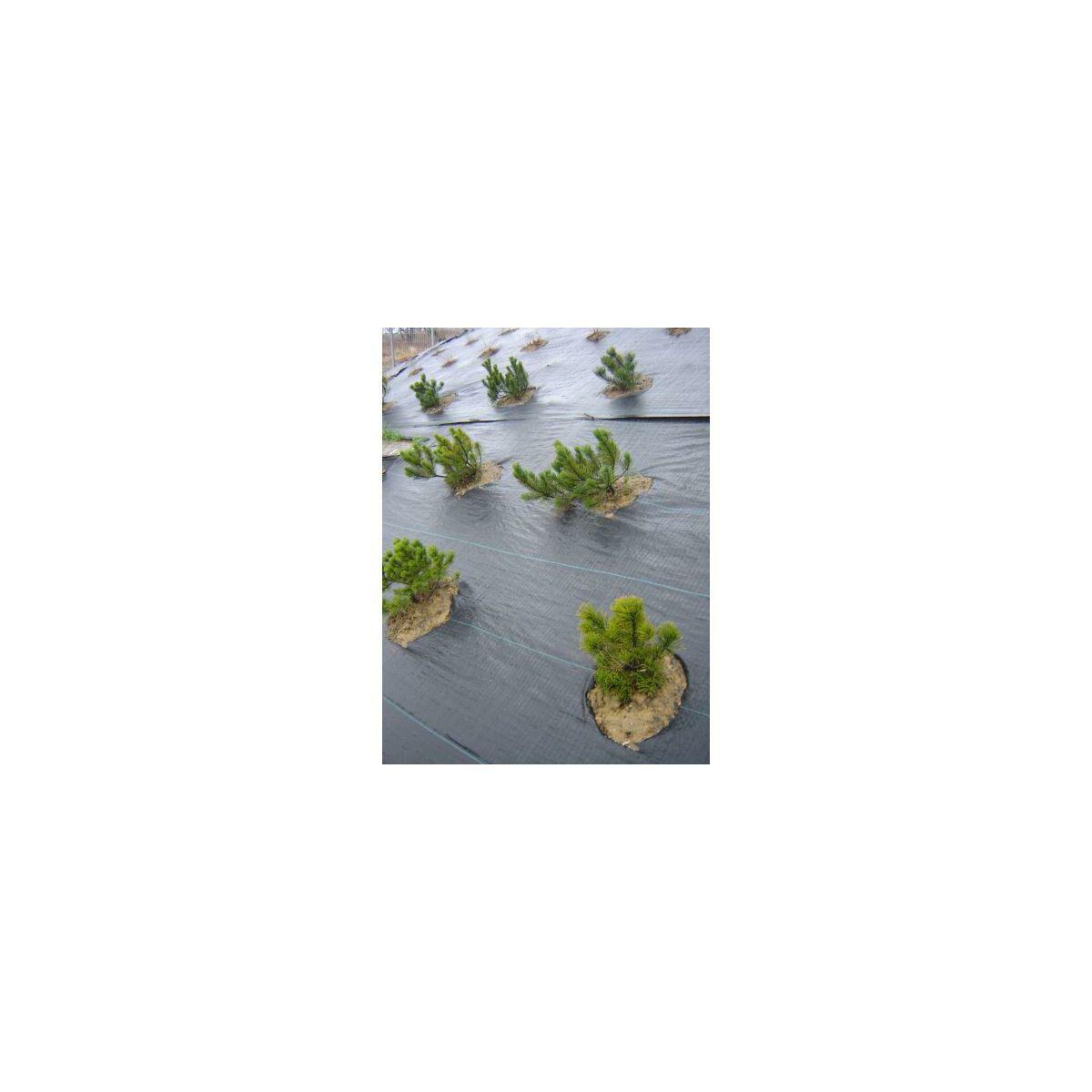 Tkanina Ogrodnicza 1 6m 95g M2 Czarna Agrowlokniny Tkaniny Sciolkujace W Atrakcyjnej Cenie W Sklepach Leroy Merlin
