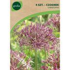 Czosnek ozdobny CHRISTOPHII 4 szt. cebulki kwiatów GEOLIA