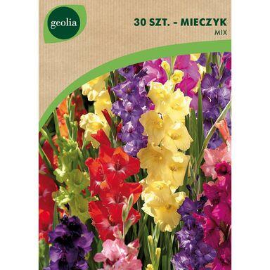 Mieczyk MIX 30 szt. cebulki kwiatów GEOLIA