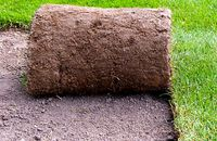 Trawnik z rolki czy z siewu – czym się różnią? Nasze porównanie