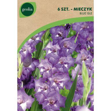 Cebulki kwiatów BLUE ISLE Mieczyk 6szt. GEOLIA