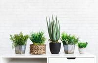 Popularne rośliny doniczkowe – najmodniejsze kwiaty w polskich domach