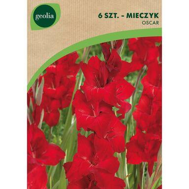 Cebulki kwiatów OSCAR Mieczyk 6szt. GEOLIA