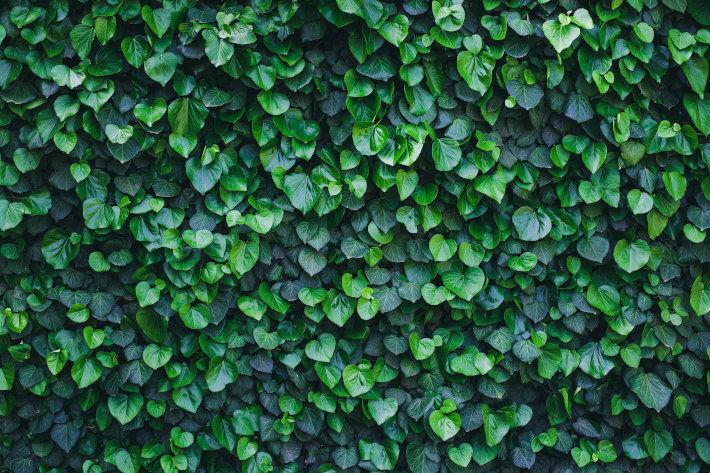 Ogrodzenie z zielonych liści