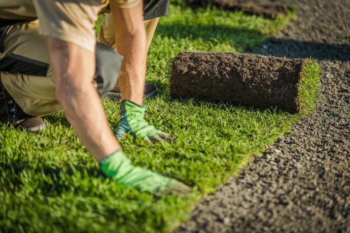 Rozwijanie trawnika