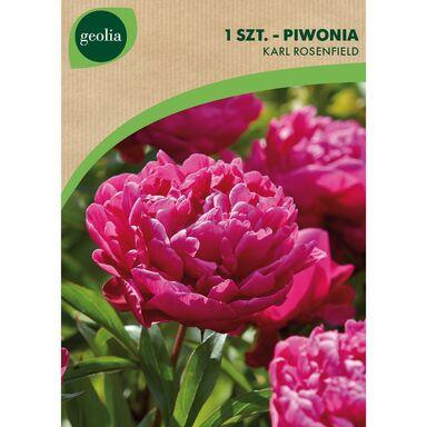 Cebulki kwiatów KARL ROSENFIELD Piwonia 1szt. GEOLIA