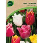 Tulipan strzępiasty MIX 5 szt. GEOLIA