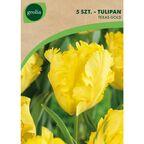 Tulipan papuzi TEXAS GOLD 5 szt. cebulki kwiatów GEOLIA
