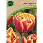 Tulipan pełny późny DOUBLE FOCUS 5 szt. cebulki kwiatów GEOLIA