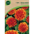 Cebulki kwiatów BERLINER ORANGE Dalia dekoracyjna 1szt. GEOLIA