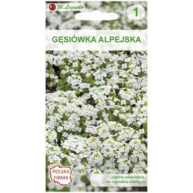 Nasiona kwiatów BIAŁA Gęsiówka alpejska W. LEGUTKO