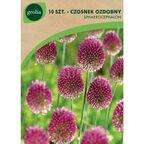 Czosnek główkowaty 10 szt. cebulki kwiatów GEOLIA