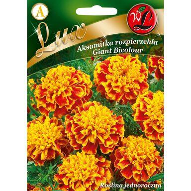 Nasiona kwiatów GIANT BICOLOUR Aksamitka rozpierzchła W. LEGUTKO