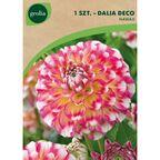Dalia dekoracyjna HAWAII 1 szt. cebulki kwiatów GEOLIA