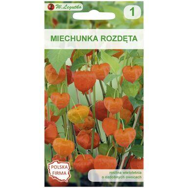 Miechunka rozdęta POMARAŃCZOWA nasiona tradycyjne 0.2 g W. LEGUTKO