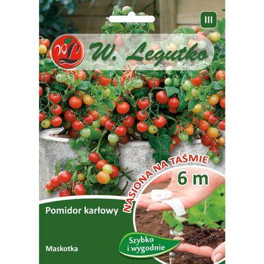 Pomidor gruntowy karłowy MASKOTKA nasiona na taśmie 6 m W. LEGUTKO