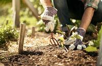 Drobne prace w ogrodzie - jak się przygotować?