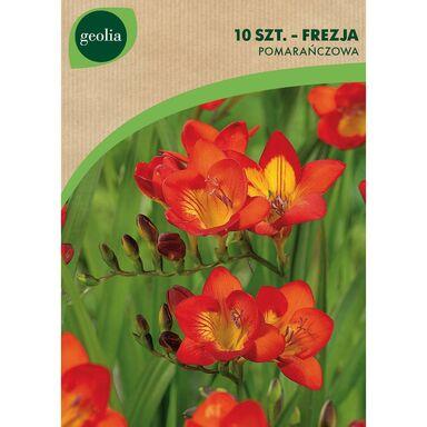 Cebulki kwiatów Frezja pojedyncza 10szt. GEOLIA