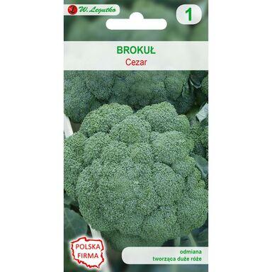 Brokuł CEZAR nasiona tradycyjne 2 g W. LEGUTKO