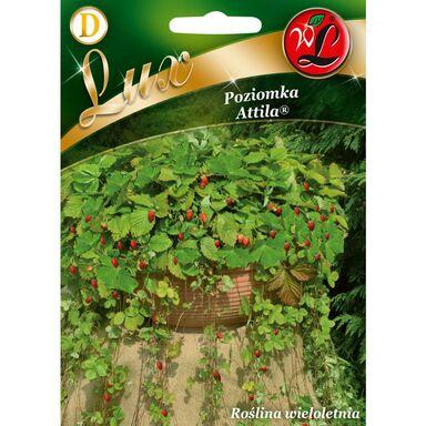 Nasiona owoców ATTILA Poziomka W. LEGUTKO