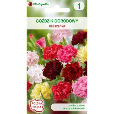 Nasiona kwiatów MIESZANKA Goździk ogrodowy W. LEGUTKO