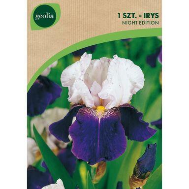 Irys bródkowy NIGHT EDITION 1 szt. cebulki kwiatów GEOLIA