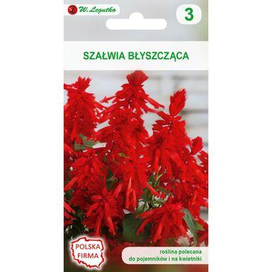 Szałwia błyszcząca CZERWONA nasiona tradycyjne 0.4 g W. LEGUTKO
