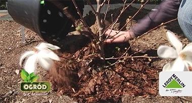 Zabezpieczenie rośliny