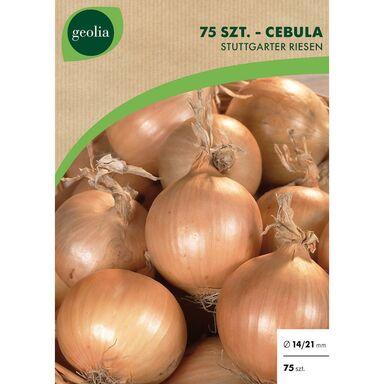 Cebulki warzyw STUTTGARTER RIESEN Cebula 75szt. GEOLIA