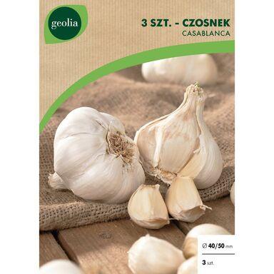 Cebulki warzyw CASSABLANCA Czosnek 3szt. GEOLIA