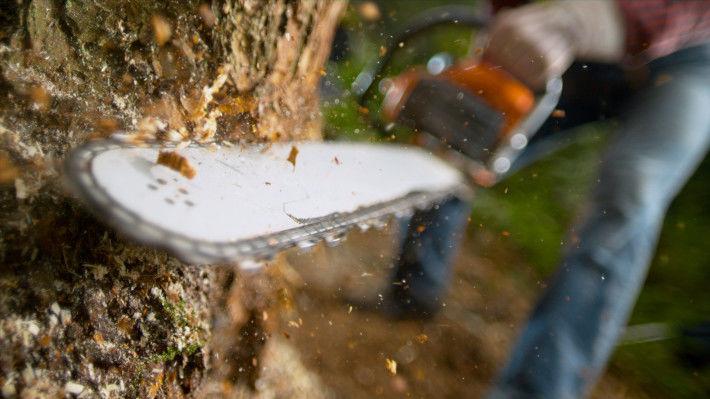 Wycinanie drzewa piłą mechaniczną