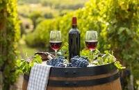 Domowe wino dla początkujących