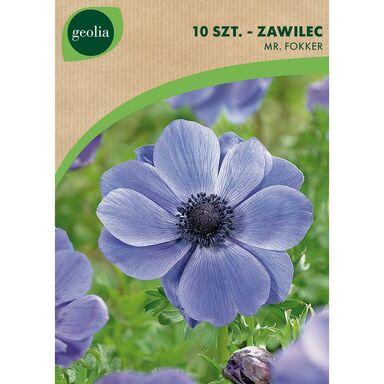 Cebulki kwiatów MR. FOKKER Zawilec 10szt. GEOLIA