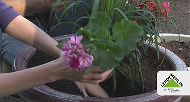 Wysadzanie roślin