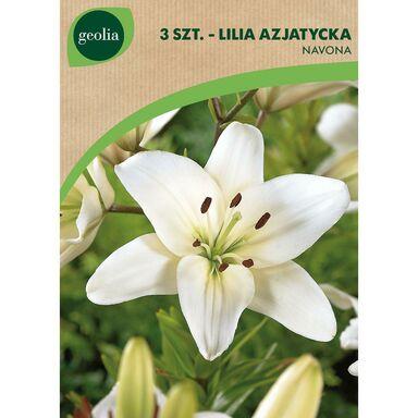 Cebulki kwiatów NAVONNA Lilia azjatycka 3szt. GEOLIA