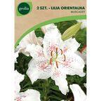 Lilia orientalna MUSCADET 2 szt. cebulki kwiatów GEOLIA