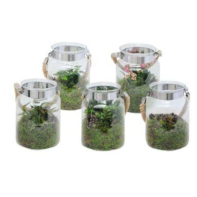 Kompozycja roślin w szklanym słoju z okuciem MIX 20 cm